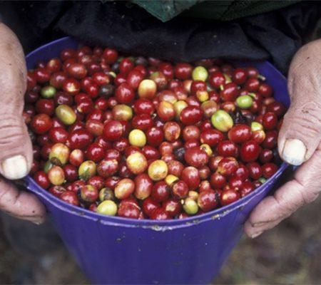 Hondura's fruits