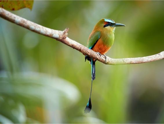 Salvador bird